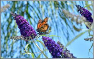 butterfly, carmel real estate